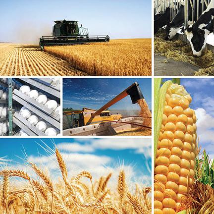 Agri Business